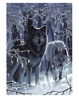 Wolf and snow